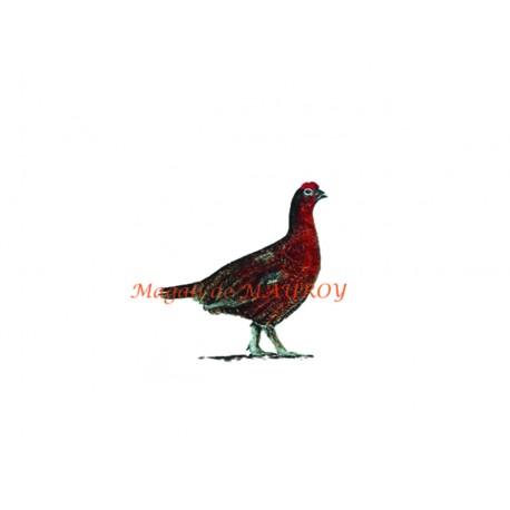 Magali de Mauroy Reproductions numérotées - Grouse