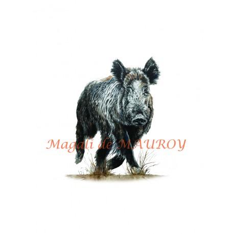 Magali de Mauroy Reproductions numérotées - Sanglier