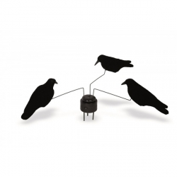 manège corbeaux-armurerie-steflo