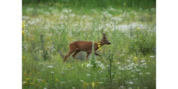 Le temps de la chasse à l'approche