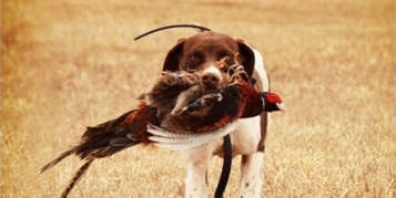 chasse au petit gibier: jamais sans mon chien!